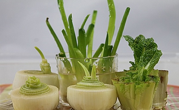 16 овощей, которые без труда можно вырастить дома. Ждать лета теперь не придется!