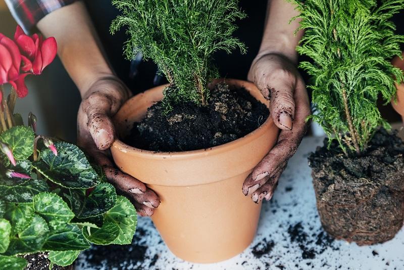 Что класть на дно горшка для пышного цветения комнатных растений