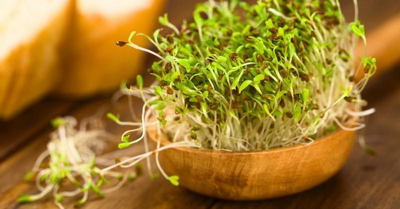 Как научиться проращивать семена