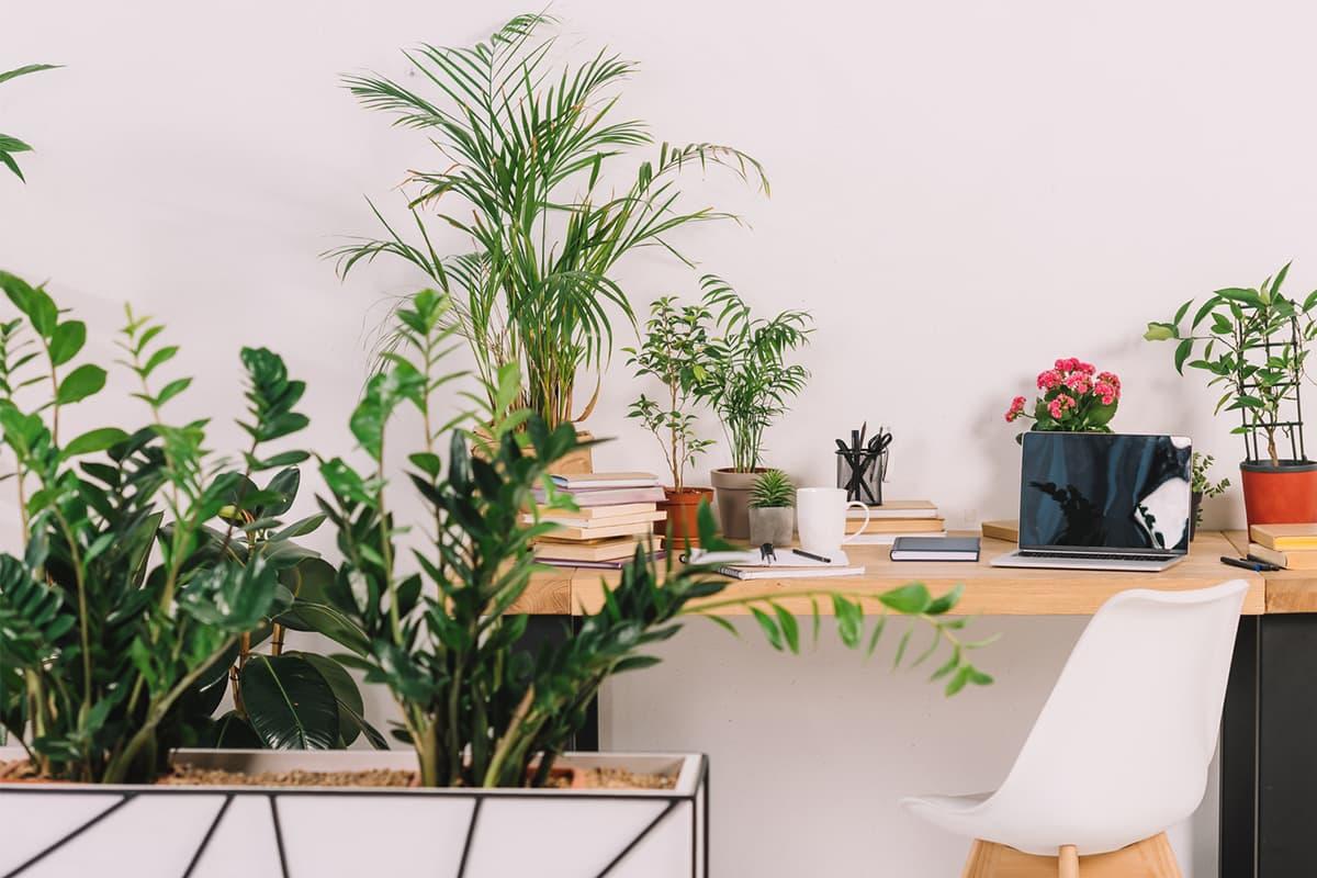 Почему хозяйственное мыло защищает растения