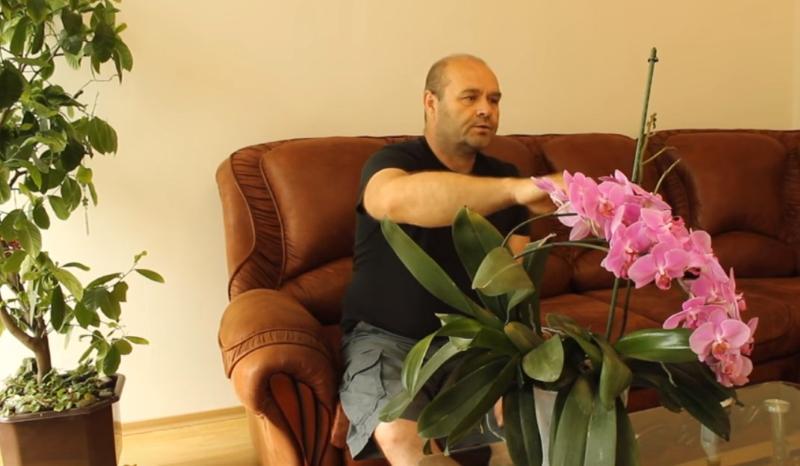 При каких условиях орхидея цветет водопадом изящных нежных бутонов
