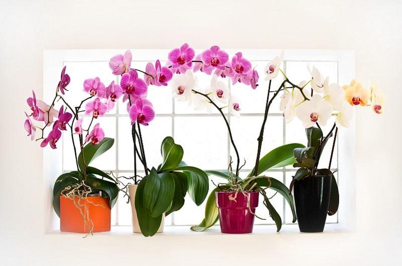 Копеечное удобрение для орхидей. Всего пару поливов, и ты не узнаешь свои цветы.