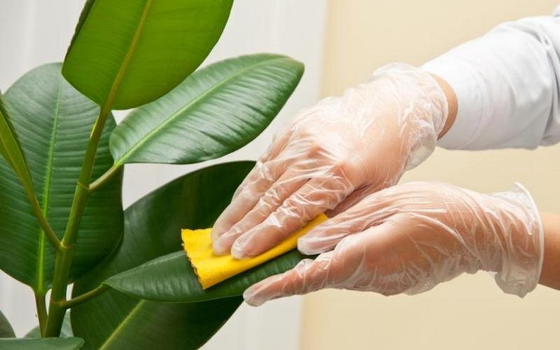 10 лучших подкормок для домашних растений: каждая максимум из 2 ингредиентов!